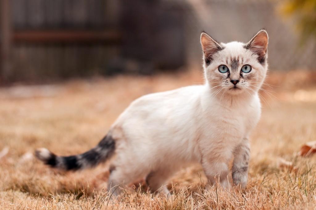 Cute-cat-top-pictures-desktop-wallpapers-full